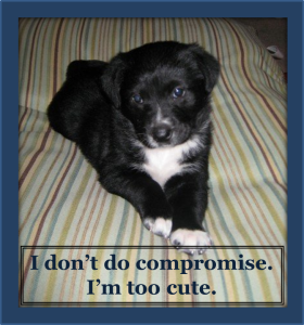I don't do compromise. I'm too cute.